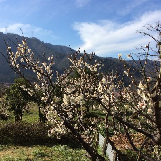 20150329_spring (2)