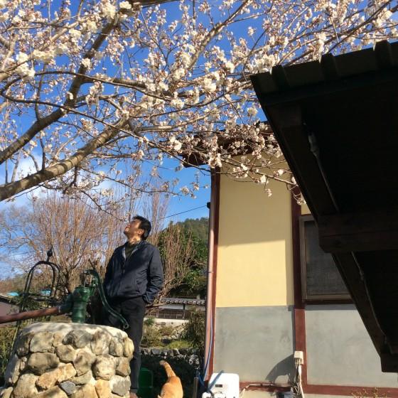 20150329_spring