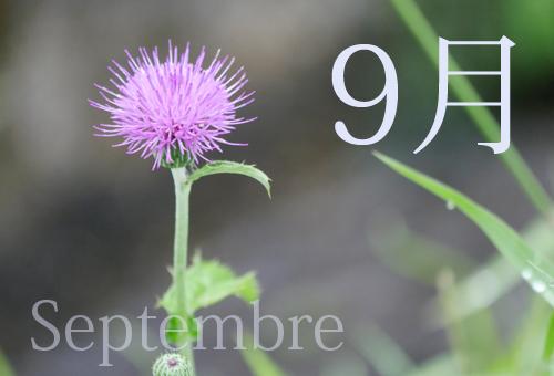 8-9月のお知らせ
