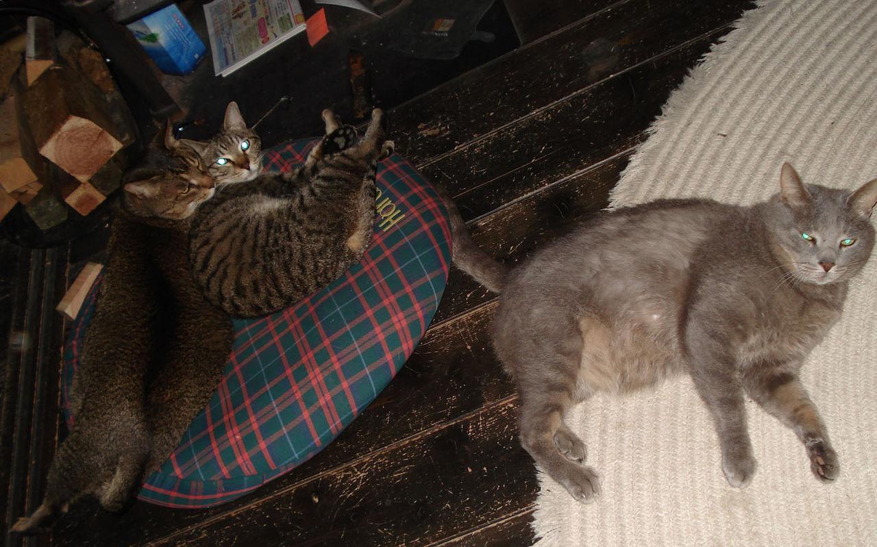 110409_cats